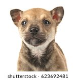 cute small puppy on white... | Shutterstock . vector #623692481