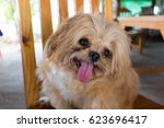 dog tongue out is sitting on... | Shutterstock . vector #623696417