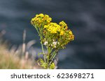 Small photo of Irish flowers