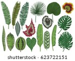 tropical leaf illustration ... | Shutterstock .eps vector #623722151