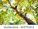 tree with yellow leaves | Shutterstock . vector #623751011