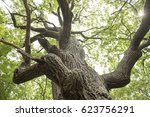 details from a famous and very... | Shutterstock . vector #623756291