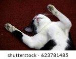 Cats Sleep In Funny Gestures ...