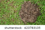 dried cow dung on the green... | Shutterstock . vector #623783135