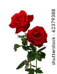 Two Fresh Red Roses Isolated...