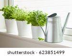 fresh basil thyme herb in a pot | Shutterstock . vector #623851499