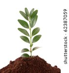 young plant in ground over... | Shutterstock . vector #62387059