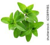 yerba buena  hierba buena ... | Shutterstock . vector #623899481