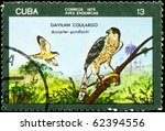 "Small photo of CUBA - CIRCA 1976: A Stamp printed in CUBA shows image of a Accipiter with the designation ""Accipiter gundlachi"" from the series ""Indigenous Birds"", circa 1976"