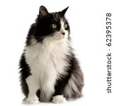Stock photo beautiful black and white male cat with green eyes 62395378