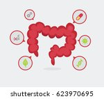 large intestine vector... | Shutterstock .eps vector #623970695