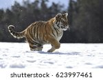 running tiger | Shutterstock . vector #623997461