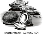 exotic fruit  coconut  cocoa. | Shutterstock .eps vector #624057764