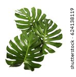 three tropical jungle monstera... | Shutterstock . vector #624138119