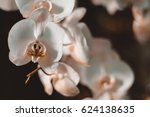 white orchid with space for... | Shutterstock . vector #624138635