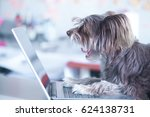 Funny Dog Works At The Laptop....