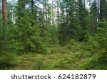 Lush Northern Forest In Karelia