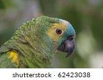 Small photo of Head of blue-fronted Amazon, Amazona aestiva xanthopteryx, Bolivia