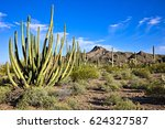 Organ Pipe Cactus In Blooming...