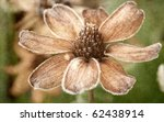 Frost Covered Flower With...