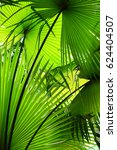 light and shadow line of palm... | Shutterstock . vector #624404507