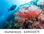 colorful camation tree corals... | Shutterstock . vector #624410375