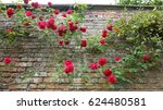Red Roses Rambling Up An Old...