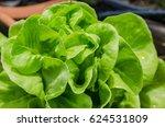vegetable is growing in garden...   Shutterstock . vector #624531809