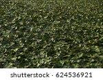 landscape with waterline  reeds ... | Shutterstock . vector #624536921