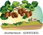 plant kiwi with some fruits in... | Shutterstock .eps vector #624551831