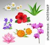 succulents tropical garden... | Shutterstock .eps vector #624554669