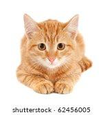 Cute Little Red Kitten Isolate...
