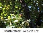Small photo of oak