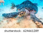 sea turtle underwater | Shutterstock . vector #624661289