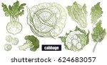various cabbage set. white... | Shutterstock .eps vector #624683057