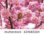 the japanese white eye and... | Shutterstock . vector #624683264