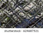 fruits blossom  spring through...   Shutterstock . vector #624687521