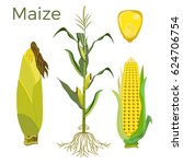 set of maize plant. vector... | Shutterstock .eps vector #624706754