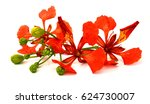 beautiful red delonix regia... | Shutterstock . vector #624730007
