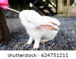 White Rabbit Drinking Water....