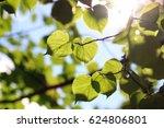 Leaf Tree Background Backlight...