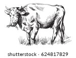 sketches of cows drawn by hand. ... | Shutterstock .eps vector #624817829
