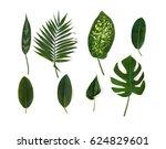 tropical leaves  monstera ... | Shutterstock . vector #624829601