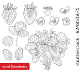 vector set with outline... | Shutterstock .eps vector #624851675