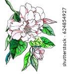 white camellia flower blossom.... | Shutterstock . vector #624854927