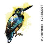 Bird Of Kingfisher. Drawing By...