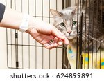 hand of a woman petting a... | Shutterstock . vector #624899891