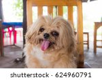 dog tongue out is sitting on... | Shutterstock . vector #624960791