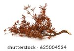 tree branches isolated on white ... | Shutterstock . vector #625004534