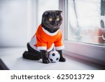 Stock photo british short haired cat in clothes cat soccer player a beautiful home cat sits on a windowsill 625013729